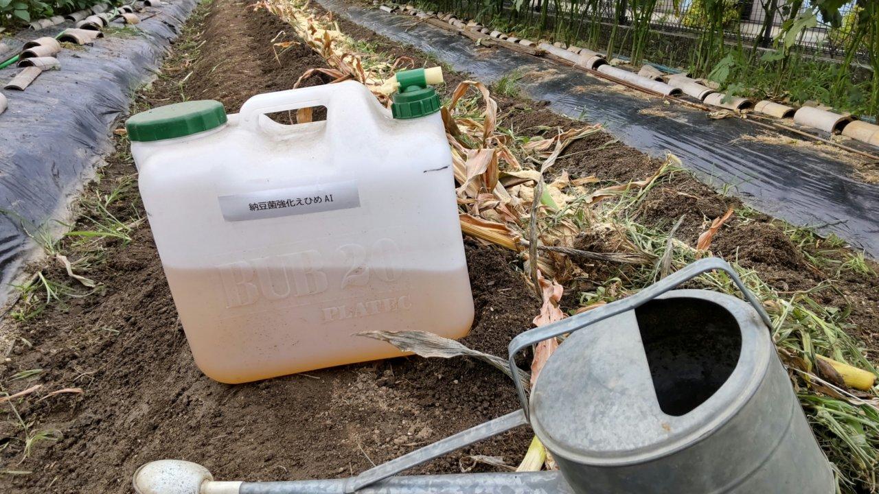 葉茎を畝の溝に埋め、ぼかし肥料、納豆菌強化えひめAIも一緒に埋める