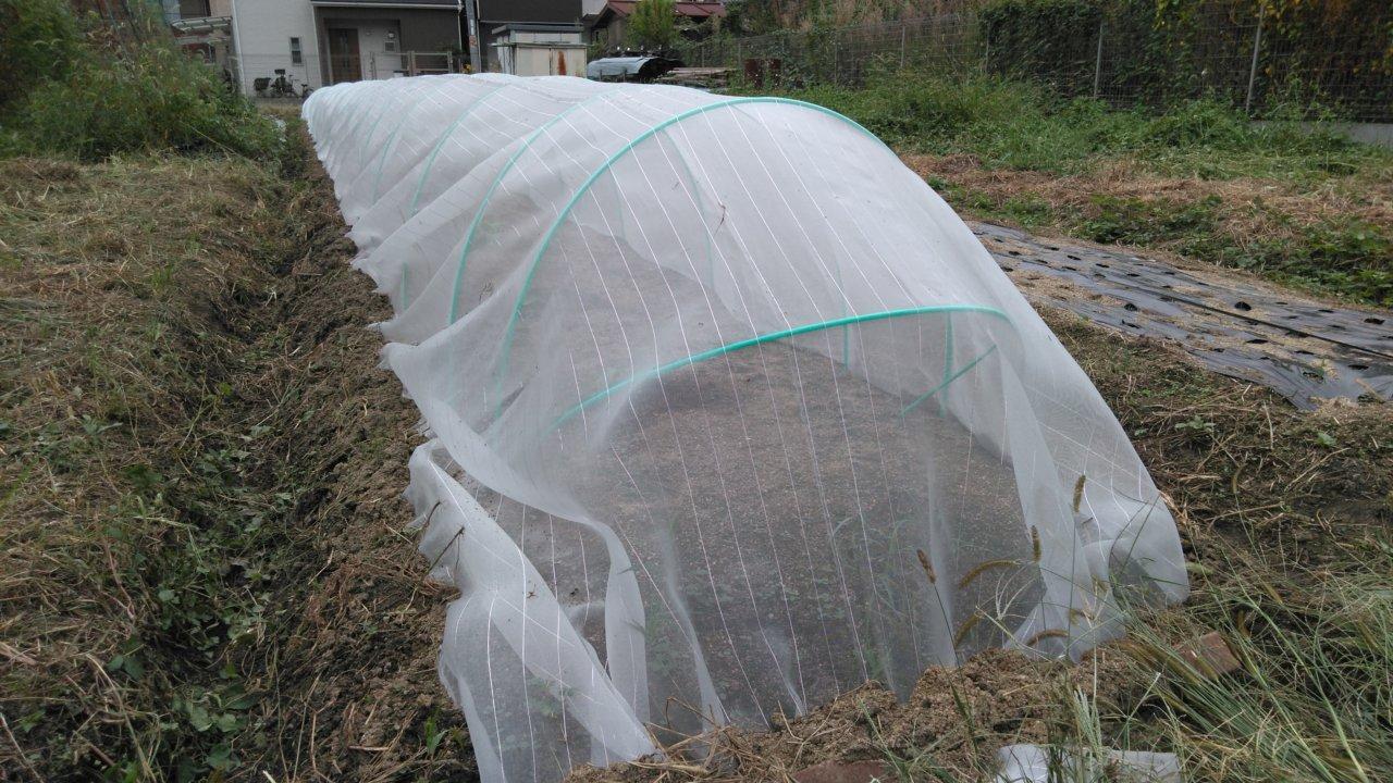 祝蕾の苗を植えたら防虫ネットの被せる